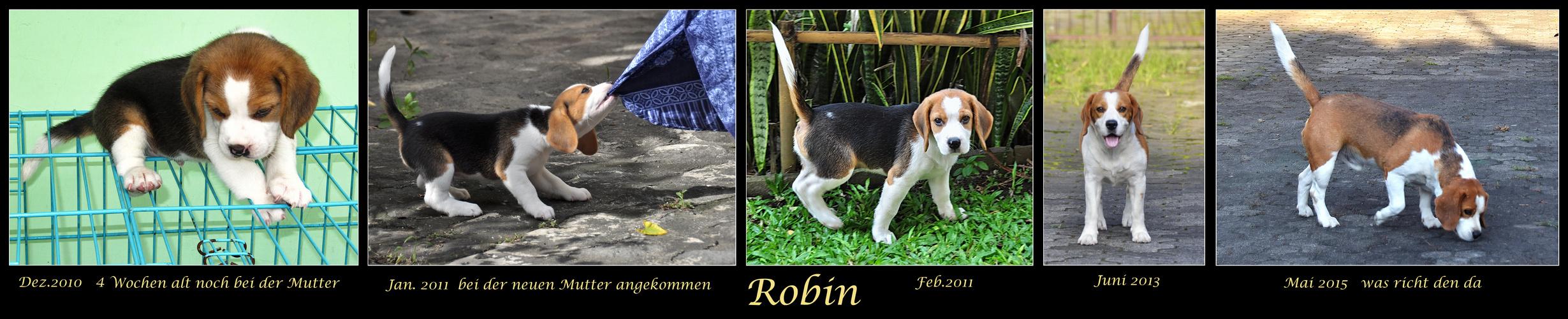 Mein Hund Robin