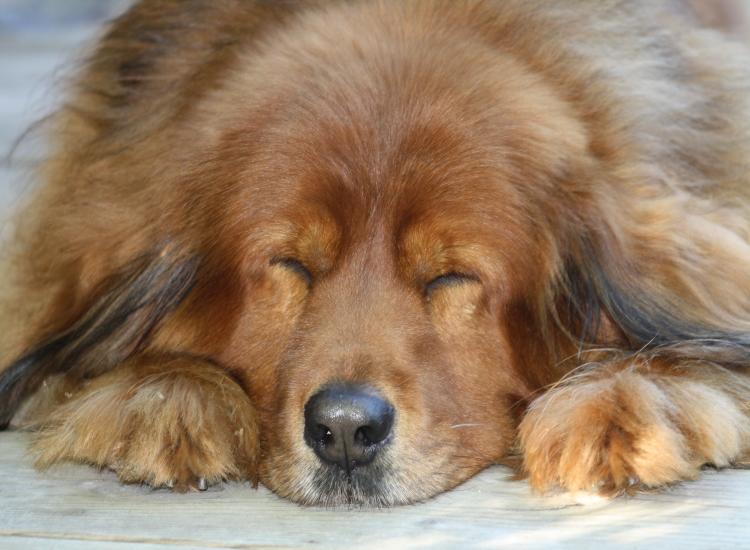 mein Hund schläft