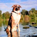 Mein Hund Spike in der Ruhr