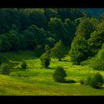 """...mein idyllisches Tal war heute im Fernsehen... (""""Expeditionen ins Tierreich"""")"""