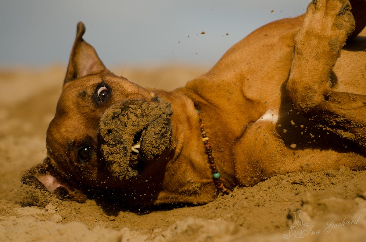 Mein irrer Sandfloh