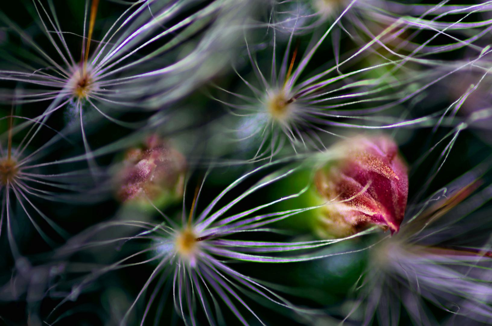 Mein Kaktus 1