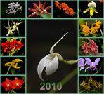 mein Kalender 2010