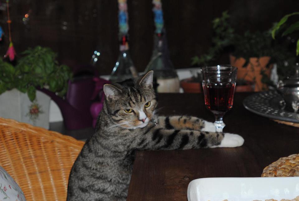 Mein Kater ist ein Trinker :-/