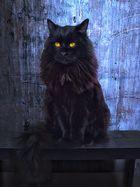 Mein Kater Merlin
