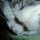 Mein Katerchen Jack in einer etwas anderen Schlafposition.