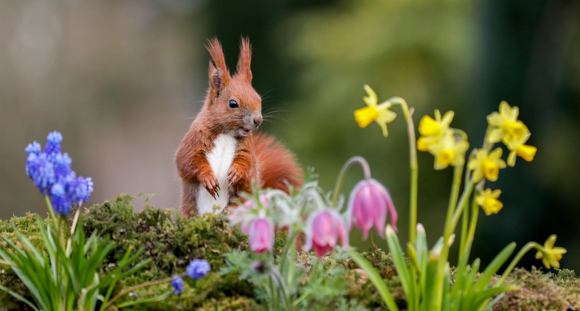 Mein kleiner Blumenfreund...