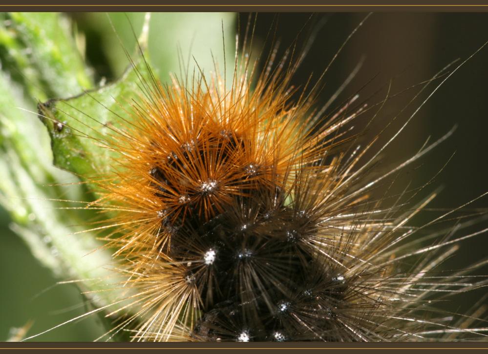 mein kleiner brauner Kaktus....