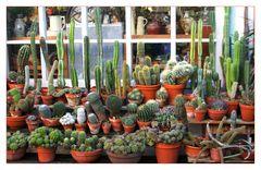 Mein kleiner grüner Kaktus...