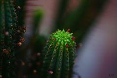 Mein kleiner grüner  Kaktus....