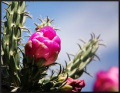 ...Mein kleiner grüner Kaktus...