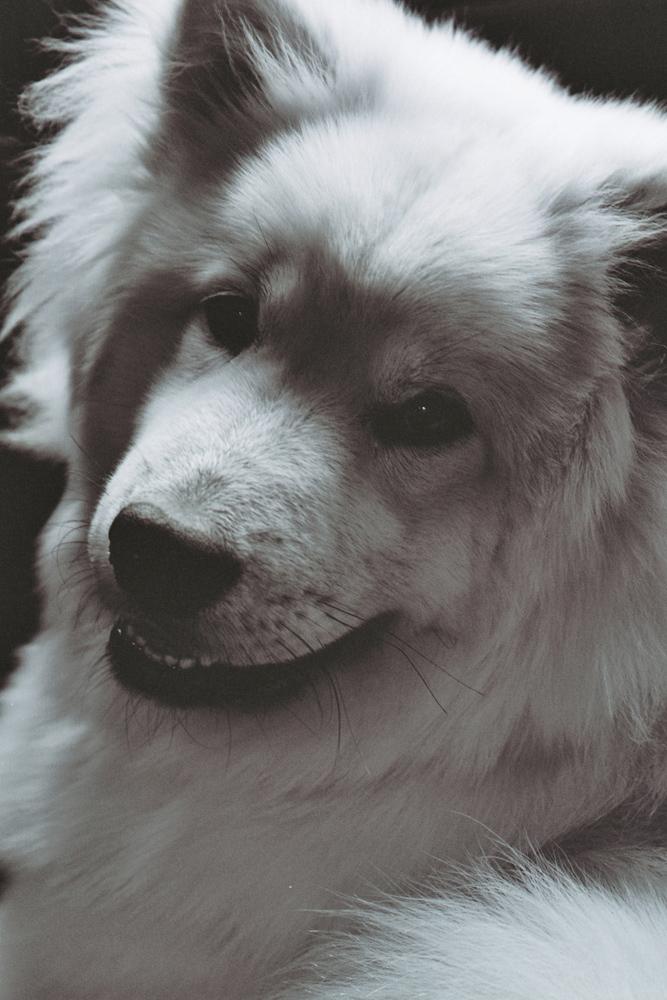 Mein Kleiner Hunde Bär Foto Bild Natur Tiere Youth Bilder Auf