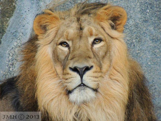 Mein Leo