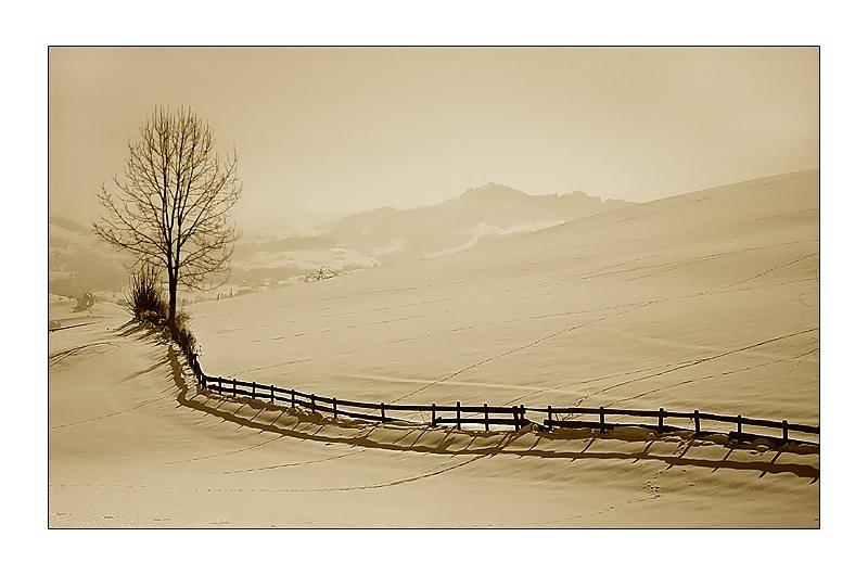 Mein letztes Winterbild......,