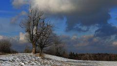 Mein Liebelingsbaum auf der Nollendorfer Höhe zum meteorologischen Winterbgeinn...