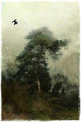 Mein Lieblingsbaum - 2. Version