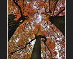 Mein Lieblingsbaum • 2011