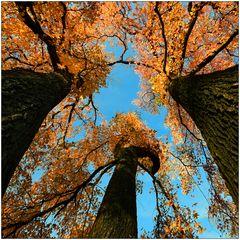Mein Lieblingsbaum • 2014