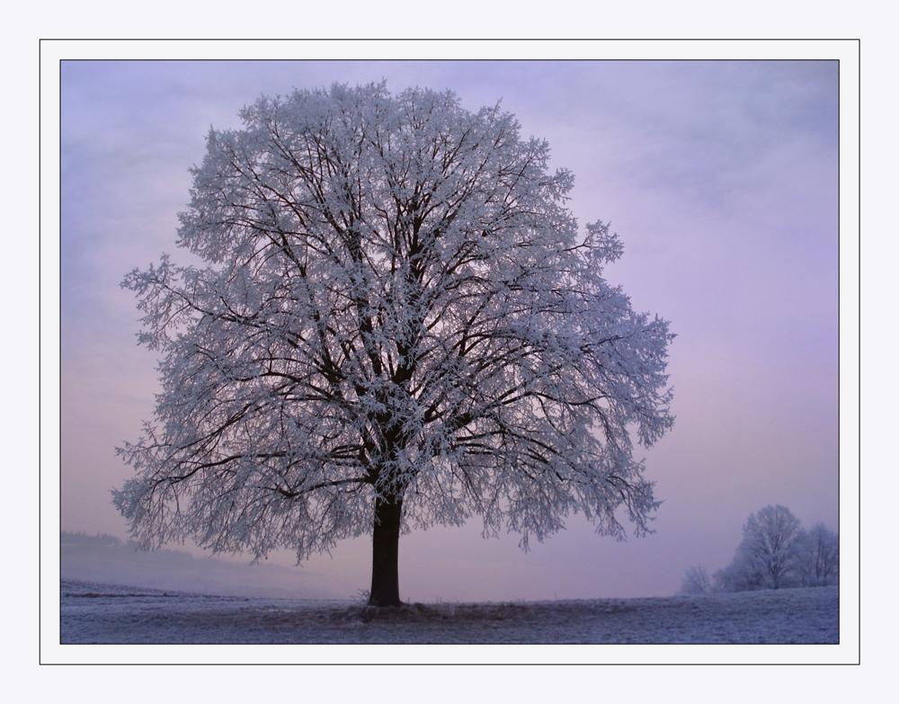 """""""Mein Lieblingsbaum"""""""