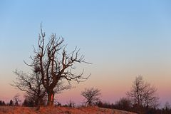 Mein Lieblingsbaum bei einem herrlichen Morgen auf der Naklerov vysina (Nollendorfer Höhe) in Böhmen