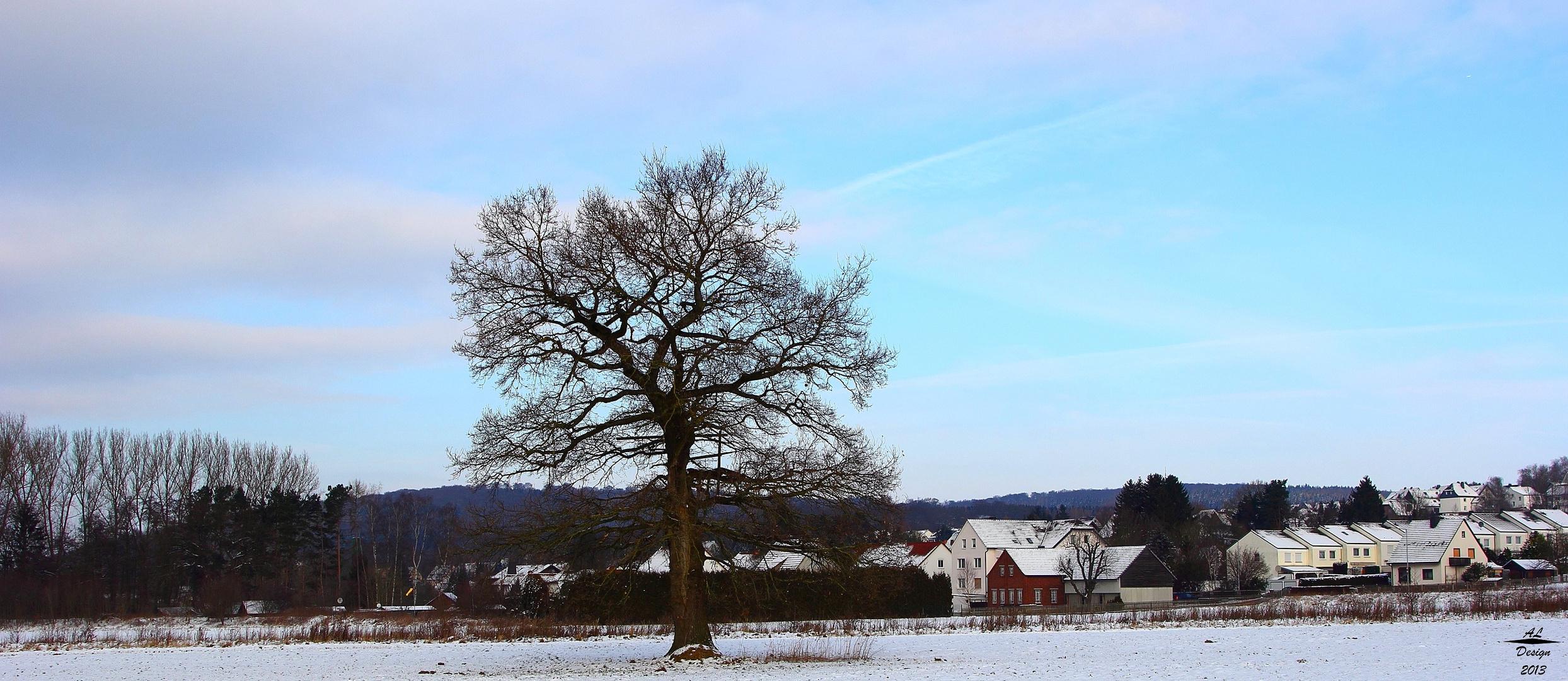 Mein Lieblingsbaum bzw. Jahresprojekt