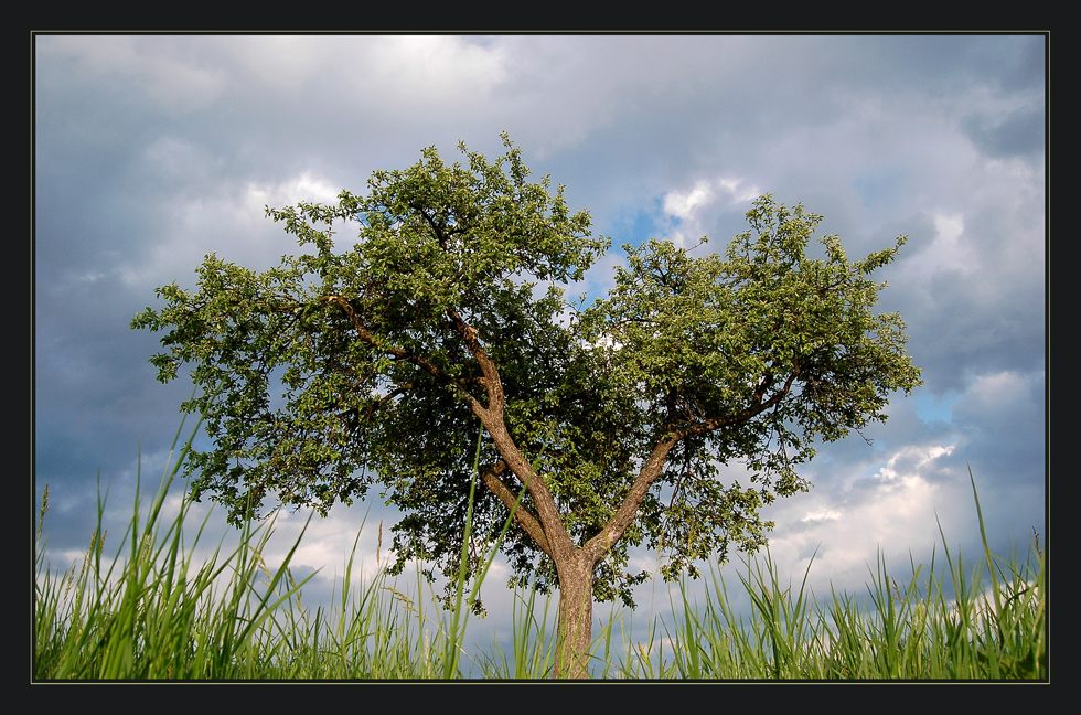 Mein Lieblingsbaum * Frühling 08