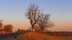 Mein Lieblingsbaum links seit Jahren dort oben auf der Naklerovska vysina...