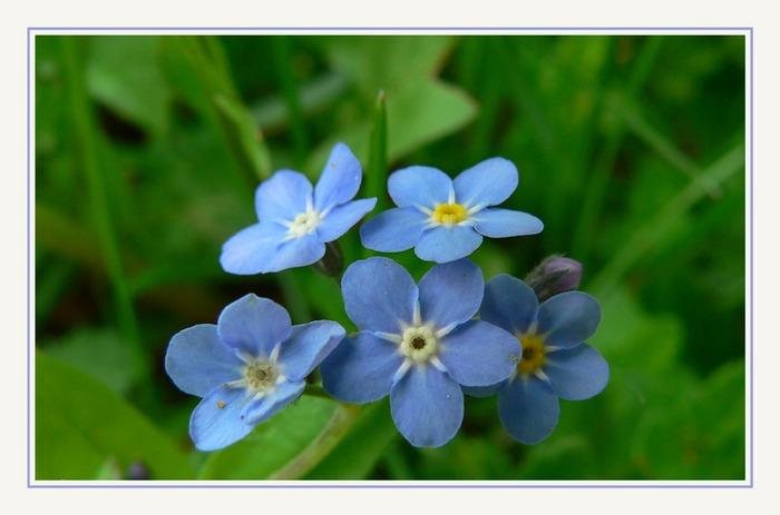 Mein Lieblingsblümchen