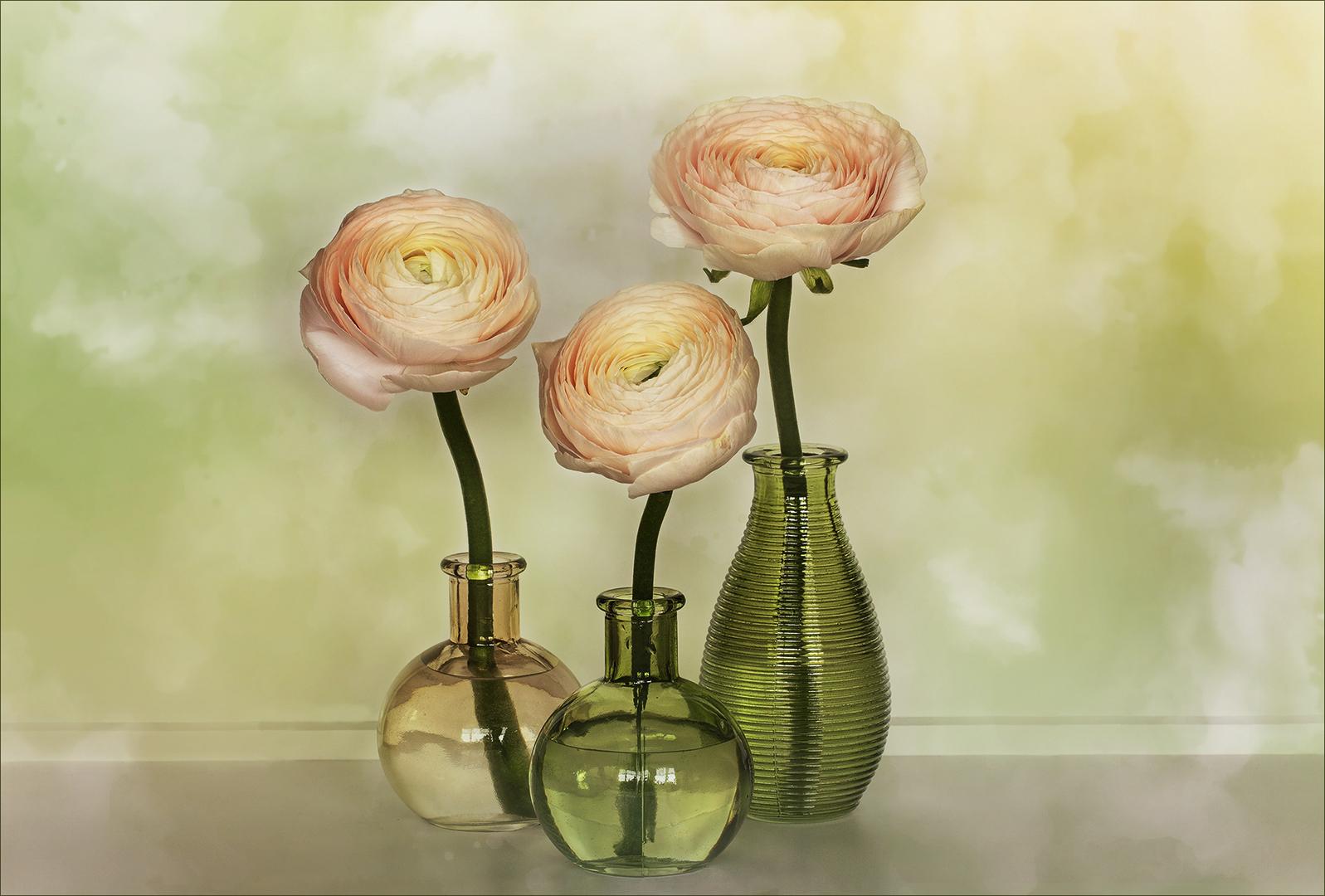 Mein Lieblingstrio - Ranunculus asiaticus...