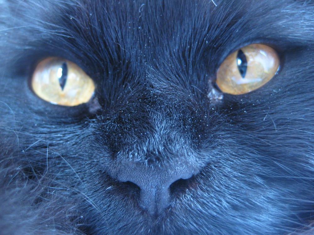 mein Merlin