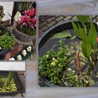 Mein Mini-Gartenteich