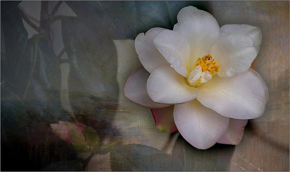 ~~Mein Mittwochsblümchen 13~~