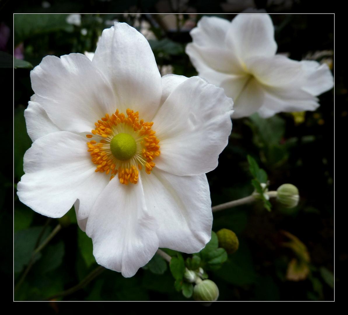 #...Mein Mittwochsblümchen....#