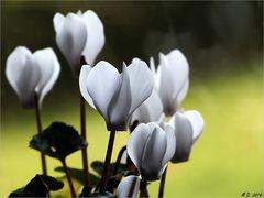 Mein Mittwochsblümchen....