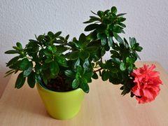 Mein Mittwochsblümchen…