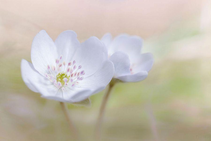 *Mein Mittwochsblümchen*