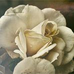Mein Mittwochsblümchen ...
