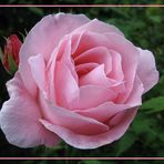 """Mein Name ist """"ROSA"""""""