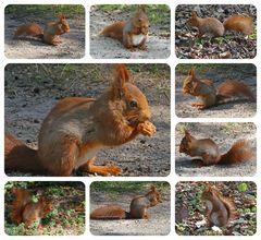 Mein neuer Freund, das Eichhörnchen