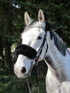 Mein Neues Pferd :)