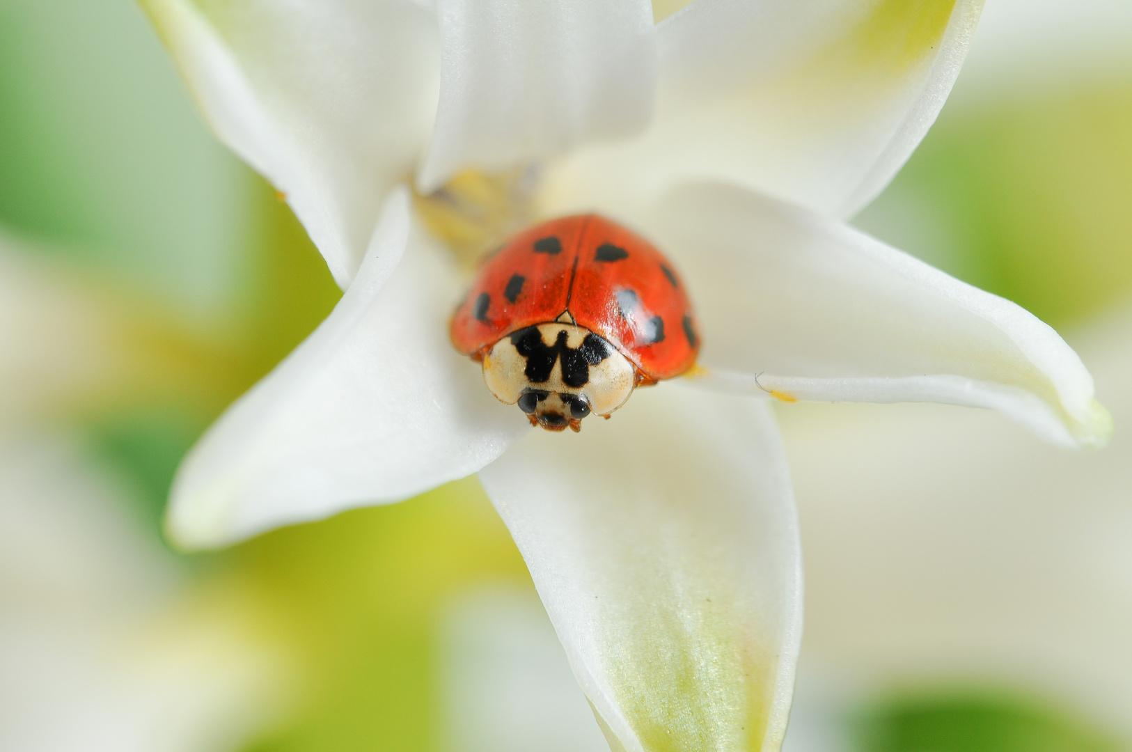 mein neues zuhause foto bild tiere wildlife insekten bilder auf fotocommunity. Black Bedroom Furniture Sets. Home Design Ideas