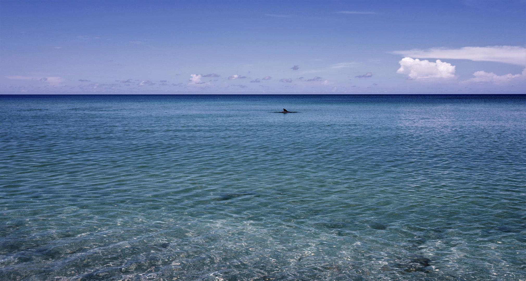 Mein Paradies mit Delfin
