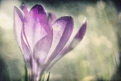 Mein persönlicher Frühling