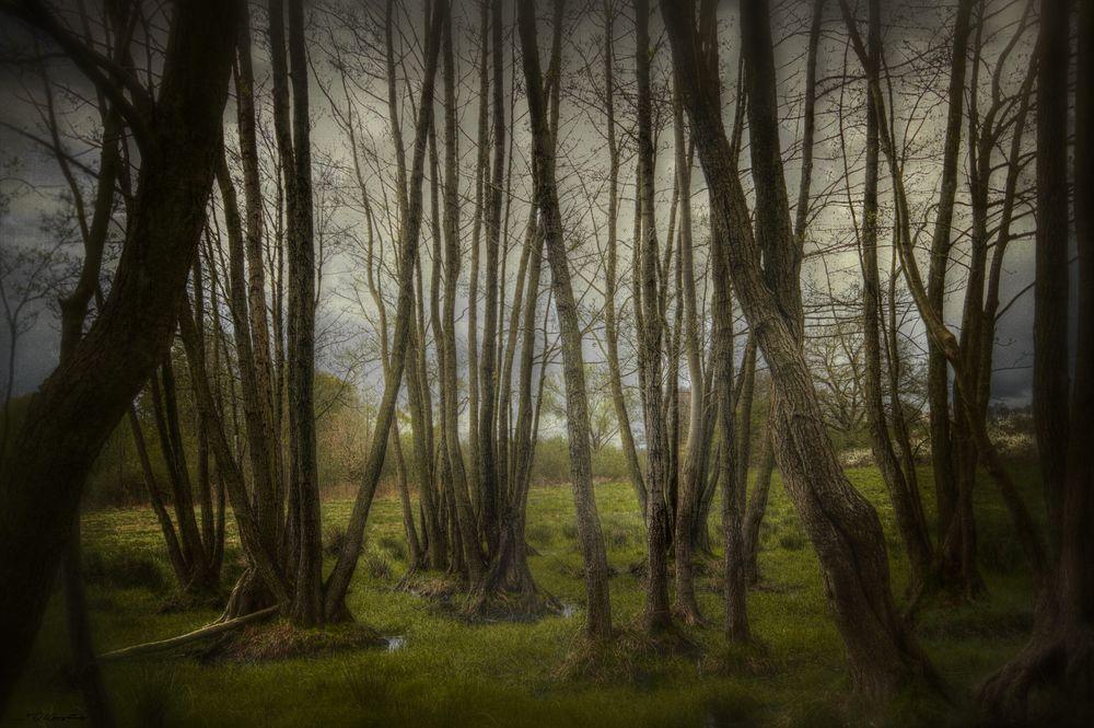 Mein persönlicher kleiner Gespensterwald