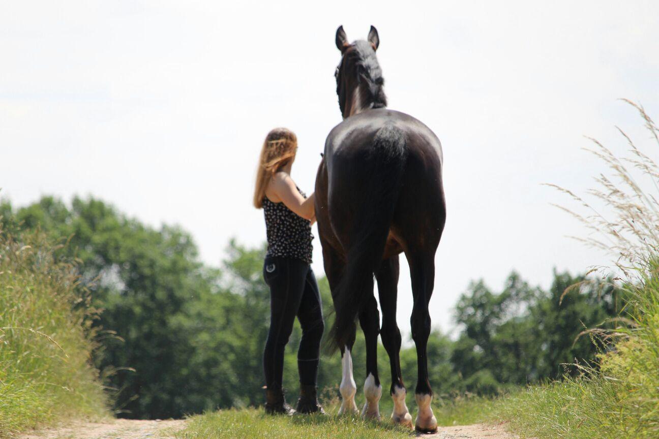 Mein Pferd bleibt mir im Sturme treu, der Mensch nicht mal im Winde!