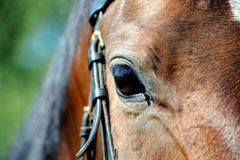 Mein Pferd Fabio