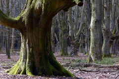 Mein Pilzwald