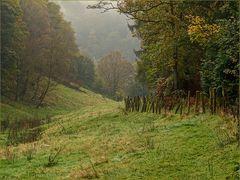 Mein Pirschgebiet im Herbstkleid.