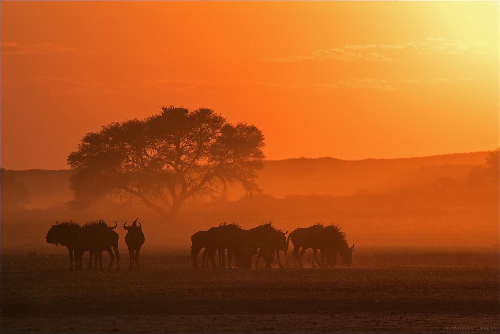Mein Roadmovie [70] - African Morning