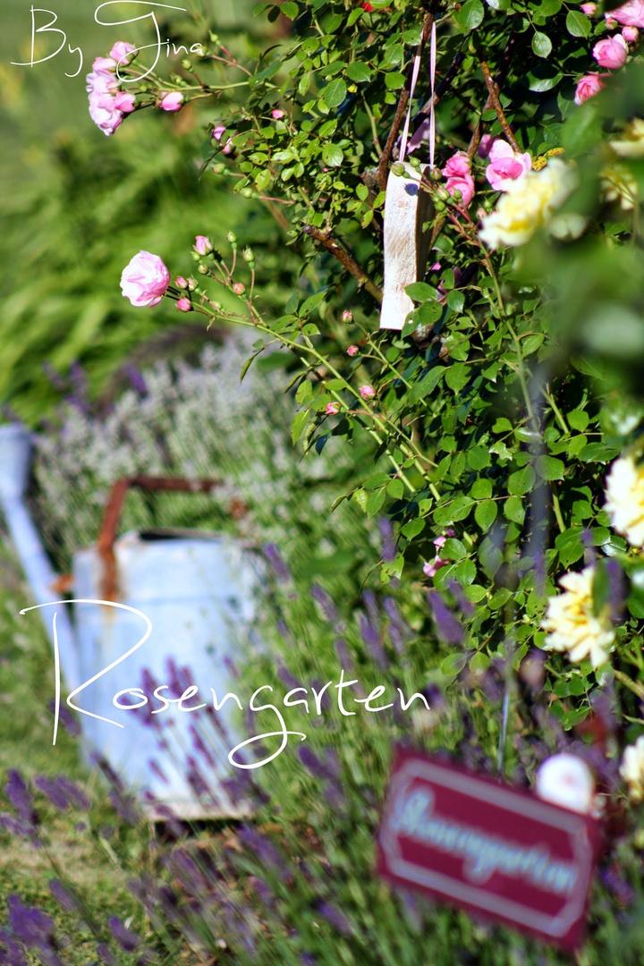 Mein Rosengarten (Sommer 2014)